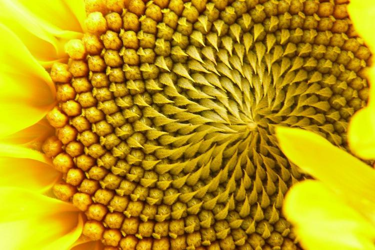 2010-ben igazolták anyagi részecskék jelenlétét az extrém magas homeopátiás hígításokban.