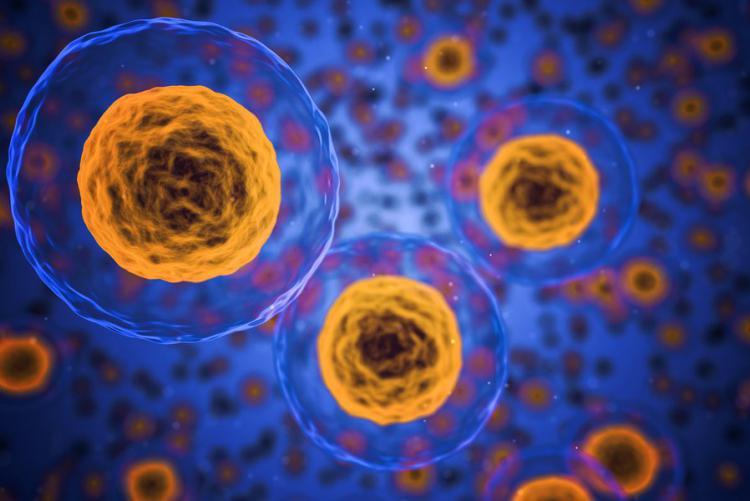 A homeopátia alapelve a hormézis, közismert biológiai jelenség: a magas koncentrációban gátló hatású ingerek alacsony koncentrációban serkentő hatásúak.