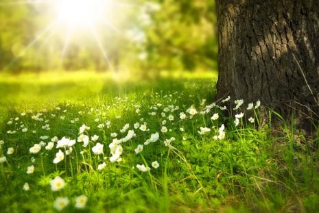 A Növények Csodálatos Rendje - Michal Yakir tanfolyama