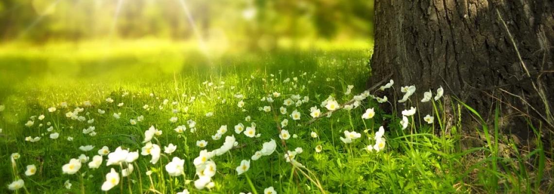 Ismerd meg a növények homeopátiás rendszerét! - Michal Yakir tanfolyama.
